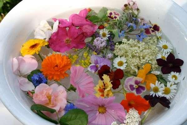 uge 12-13 spiselige blomster nær